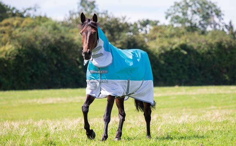 Best Fly Rugs for Your Horse