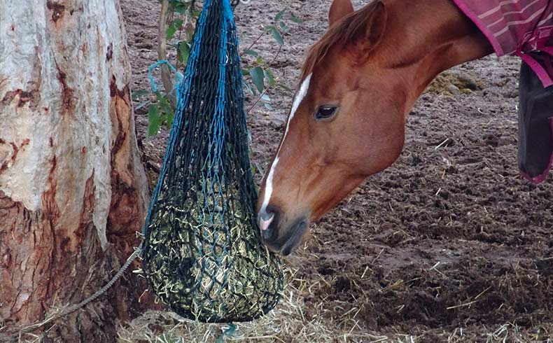 How Much Hay Does a Horse Eat a day