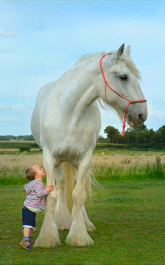 World's Largest Horse Breeds