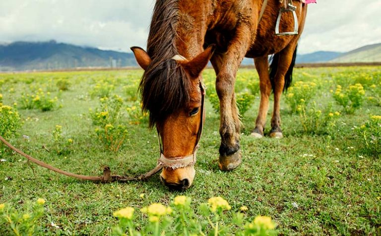 What Can Horses Eat