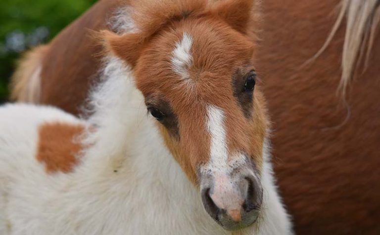 Foal baby horse