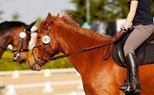 Horse Breeds for Dressage