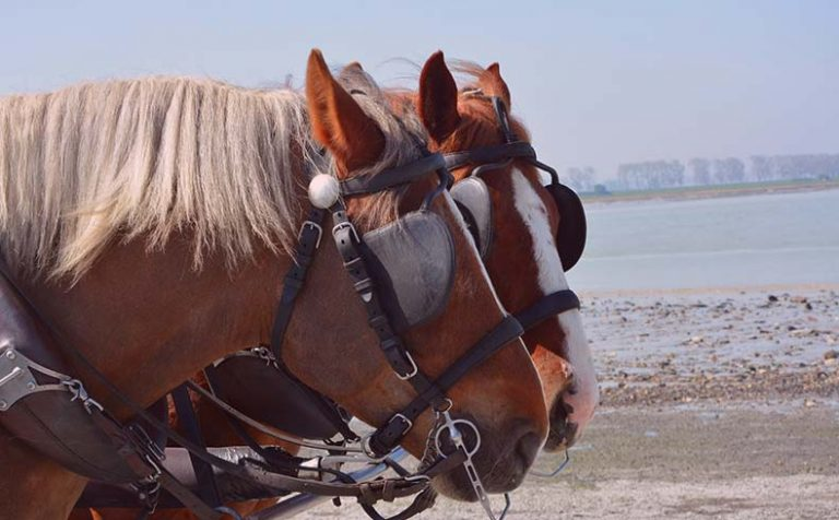 Why Do Horses Wear Blinders