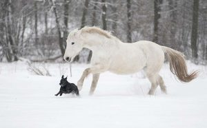 How Smart Are Horses Compared To Other Animals